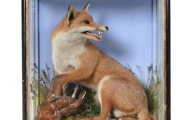 Taxidermy: A Victorian Cased Red Fox (Vulpes vulpes), by James...