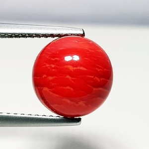 3.30 ct Natural Red Coral - Coted