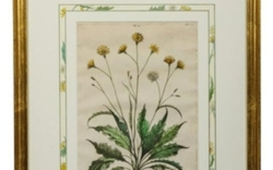 Two Botanical Prints 12 3/4 x 9 1/4 inches.