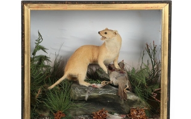 Taxidermy: A Victorian Cased Stoat (Mustela erminea), by James Hutchings,...