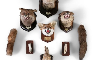 TAXIDERMYA COLLECTION OF TROPHIES, comprising of f…