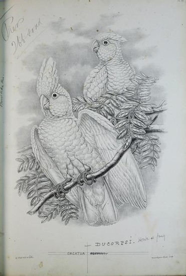 Gould's Birds of New Guinea