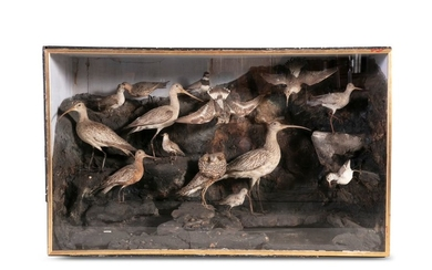 A VICTORIAN CASED TAXIDERMY DISPLAY, featuring coa…